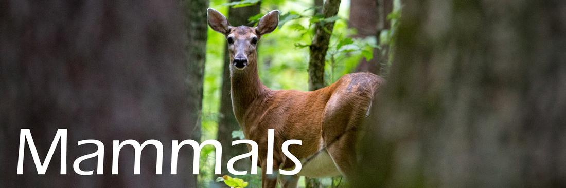 Mammals_resized