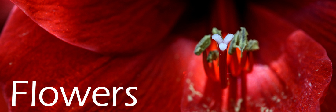 Flowers_resized